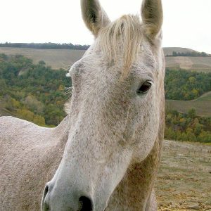 Your horses during your horseback riding holidays at fattoria Pieve a Salti, Tuscany